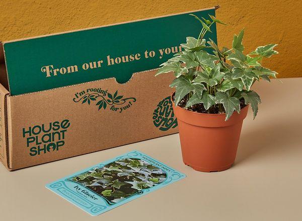 House Plant Box (ハウスプラントボックス)