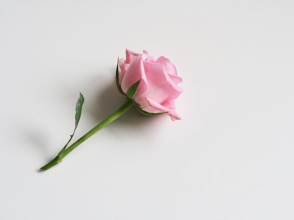 お花のサブスクリプションサービス_メリット