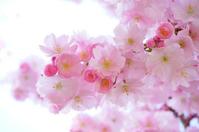 お花のサブスクリプションサービス